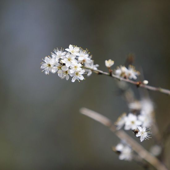 Close-up Flower Plant Fragility Flowering Plant Vulnerability  Focus On Foreground Beauty In Nature White Color Blossom Flower Head Selective Focus
