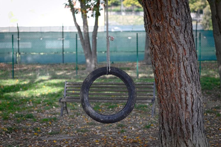 Tyre swing Autumn Isolated Light The Week On EyeEm Beauty In Nature Close-up Day Focus On Foreground Hanging Nature No People Outdoors Street Photography Sun Swing Tree Tree Trunk Tyre Tyre Swing