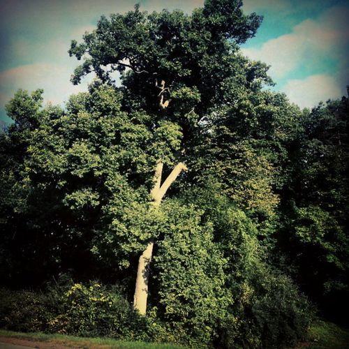 Big tree TreePorn Earlyautumn Landscape Tusseymountain rurex vignette desat explorepa trb_members1 backroads pennsylvania