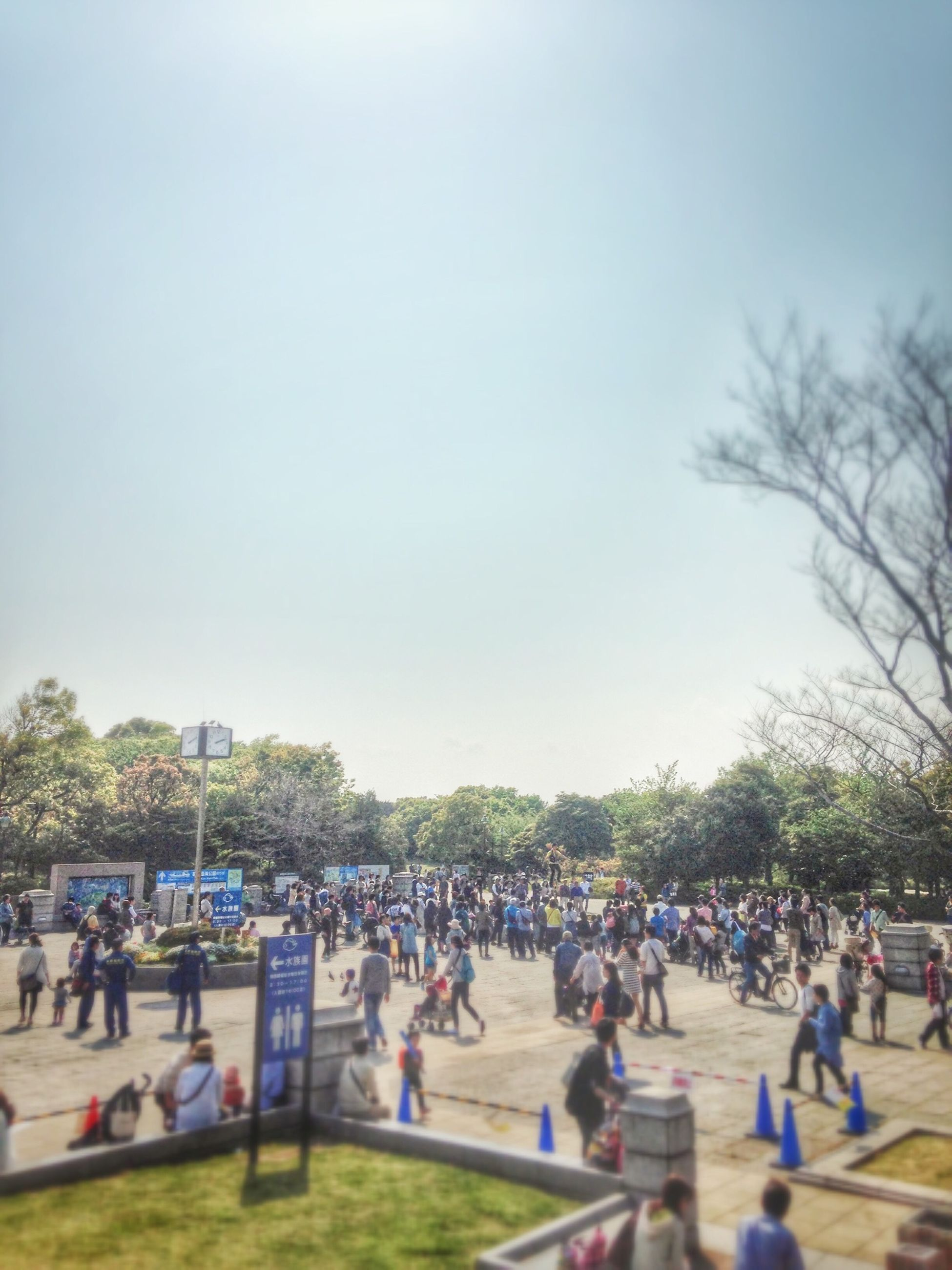 large group of people, tree, person, men, lifestyles, leisure activity, crowd, mixed age range, clear sky, copy space, park - man made space, enjoyment, sky, day, outdoors, city life, relaxation, tourist, togetherness