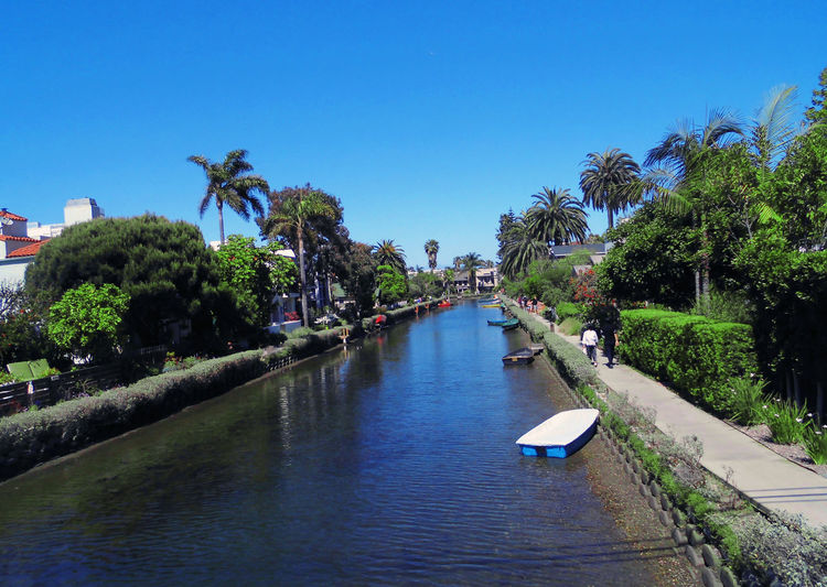Canal amidst palm trees against clear blue sky