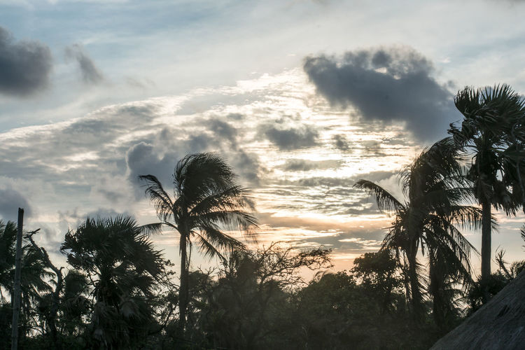 Low angle view of palm trees against sky during sunset