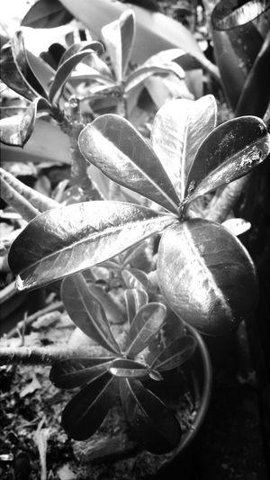 Black & White Minitree Nature Beauty