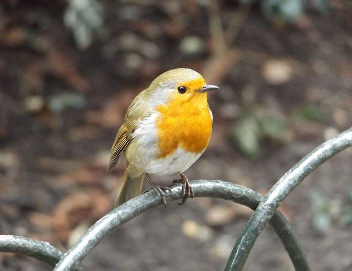 Lovely bird:)