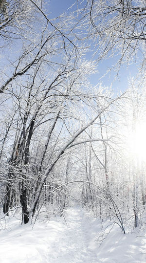 White Forest Snow Trees Ice Rain Frozen Cold Weather Branches Winter Frozen In Time Snow ❄ Winter Wonderland Snow Covered A Walk In The Woods Wintertime Cold Temperature Frozen Nature Snowy Trees Magical Forest Nature Tree Tranquility Beauty In Nature Eye4photography  EyeEm Best Shots
