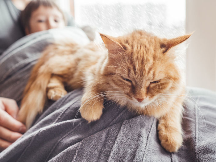 Father, son, cute ginger cat sit on window sill. family relax under blanket while snow is falling.