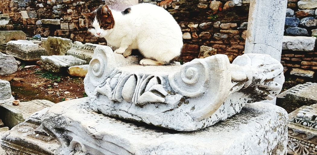 Cat on a ruin