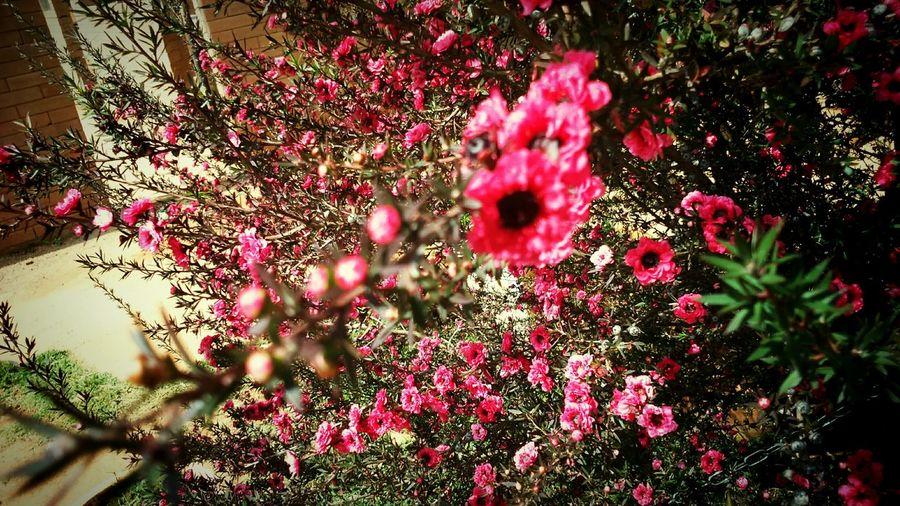 Flowers Nature Beauty OpenEdit Hello World On The Road Photooftheday EyeEm Best Shots - Flowers Autumn Flowes