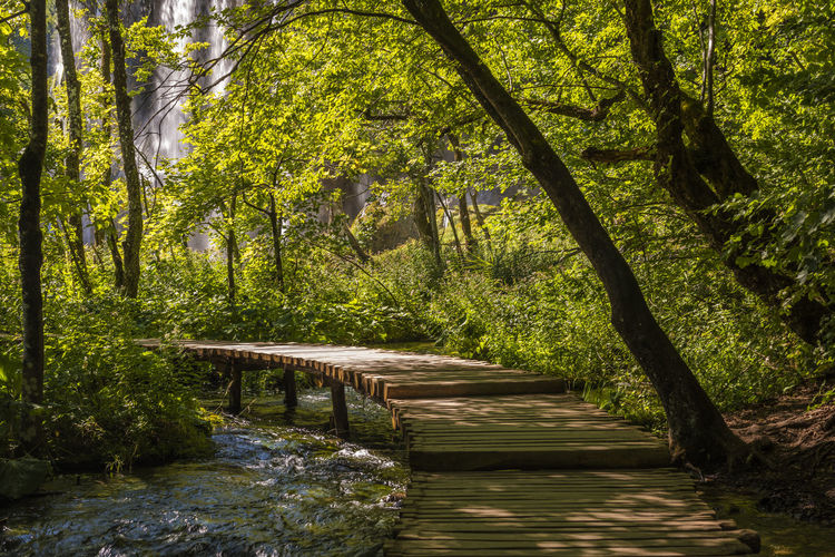 Idyllic forest