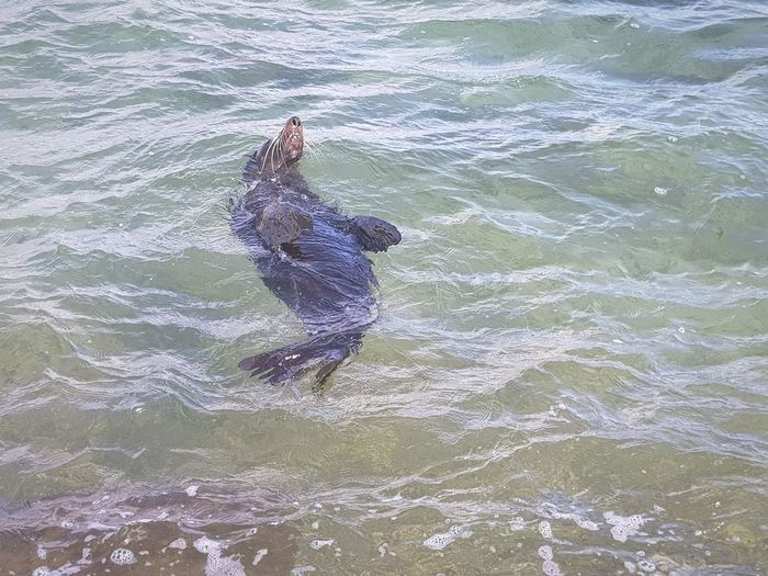 Water One Animal Outdoors Animal Themes Swimming Day No People Sea Animals In The Wild Nature Reptile UnderSea Mammal Seal