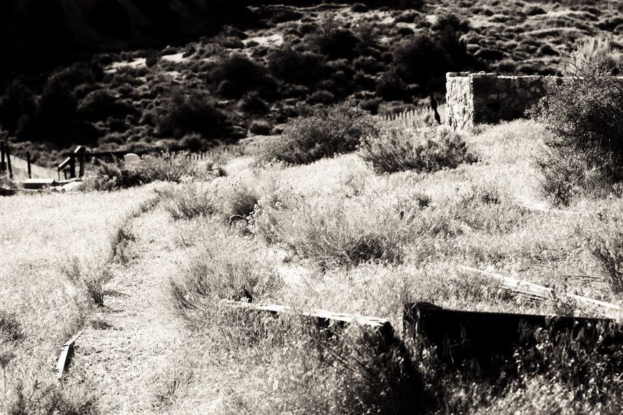 No People Nature Outdoors Day Plant Landscape Tranquility Growth Beauty In Nature Grass Close-up Sky Dark🌌 By Tisa Clark Black & White By Tisa Clark Cemetery Gravestone Darkness And Light Shadows & Lights Blackandwhite Dark Photography Tombstone