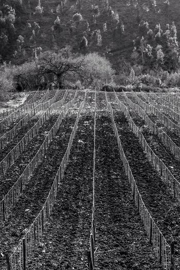Perspective Parallel Parallel Lines Two Thirds Portugal Blackandwhite Photography Blackandwhite Black And White Photography Black&white Black & White Black And White Monochrome Wineyard Wineyards Wine Country Winecountry Wine Vinyard Wine Farm OneFrame OneFrame Photography