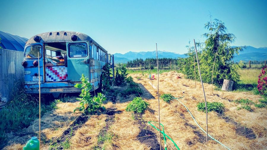 TheMagicSchoolBus Magic Bus Things I Saw Today Olympic Peninsula Mountain View