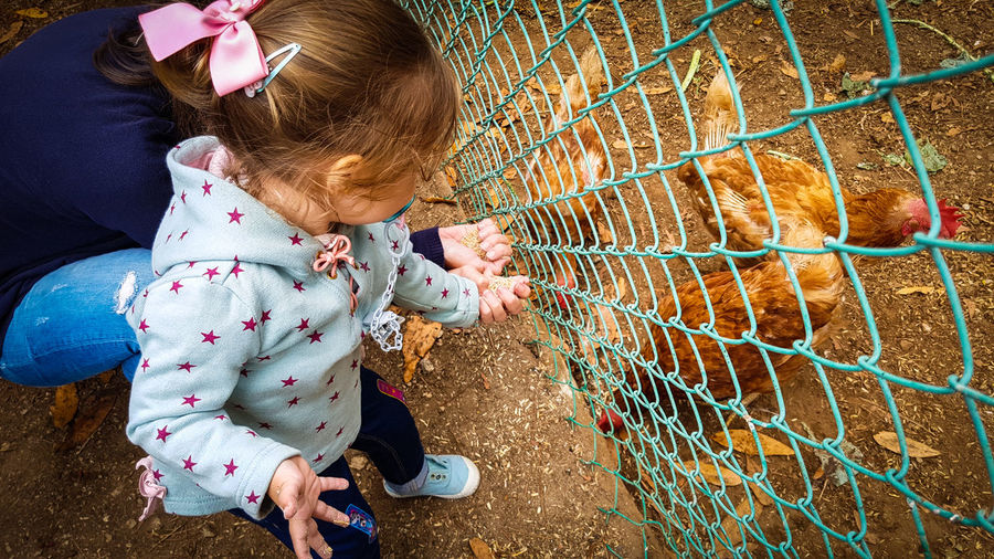 Chickens Rural Childhood Domestic Animals Innocence Person Lifestyles Learning From Nature