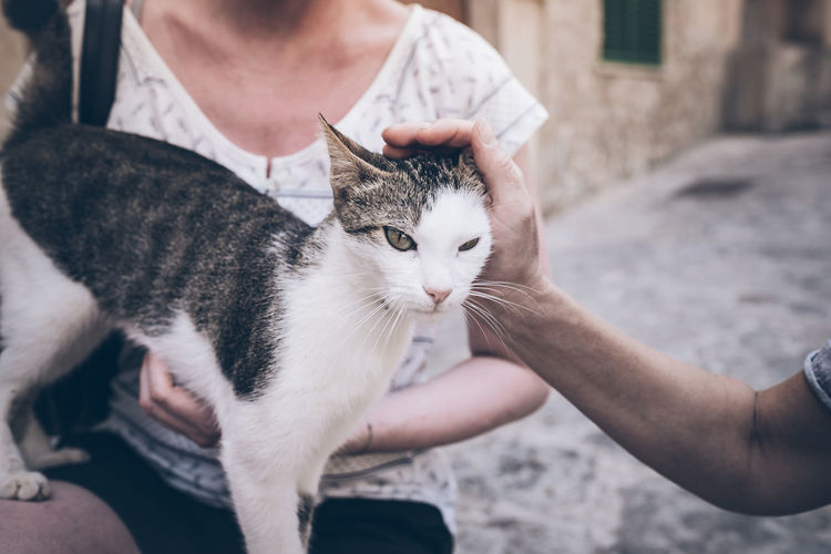 Cropped Hand Of Man Pampering Cat Held By Woman At Footpath