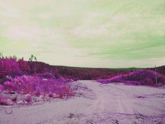 Карьер отдых природнаякрасота природароссии Природа камни небо облака красота дерево трава Travel песок карьер деревья удивительноерядом неожиданность карелия путь путешествие Flower Tree Perfume Purple Sky Landscape Cloud - Sky