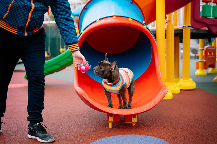 Low section of man with french bulldog dog standing at playground