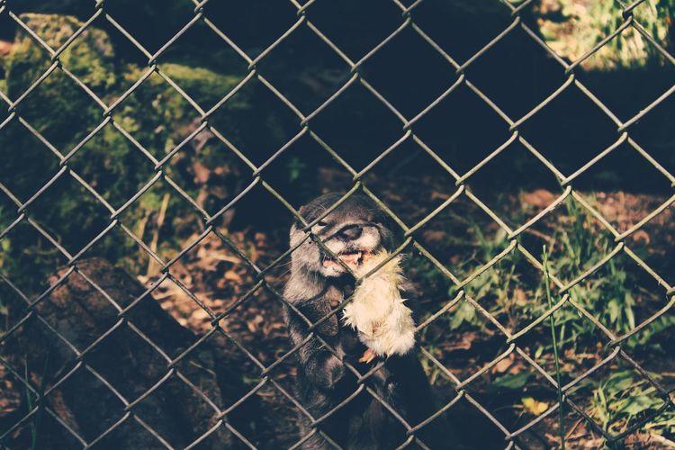 Animal seen through chainlink fence