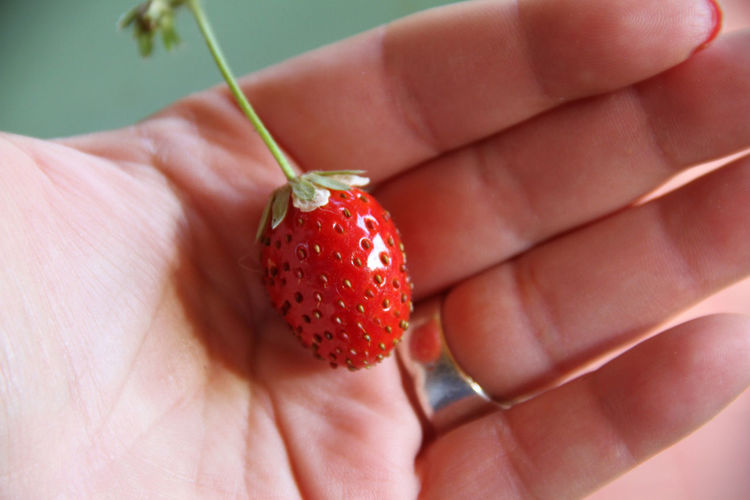 Mara Des Bois October Vitamins Bioculture Biological Close-up Food Food And Drink Freshness Fruit Healthy Eating Human Body Part Human Finger Human Hand Outdoors Red Strawberry Urbangarden Vitamin C