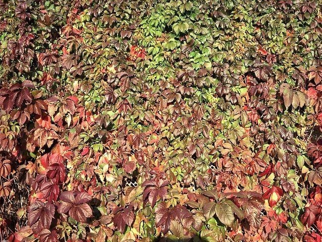 Leafage Leaves Foliage Autumn October Feuillage Feuilles Automne Octobre листва