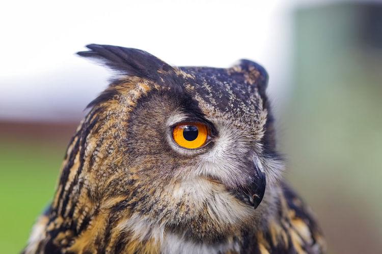 Close-up portrait of a bird