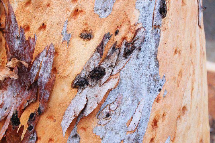 Wood Bark Tree
