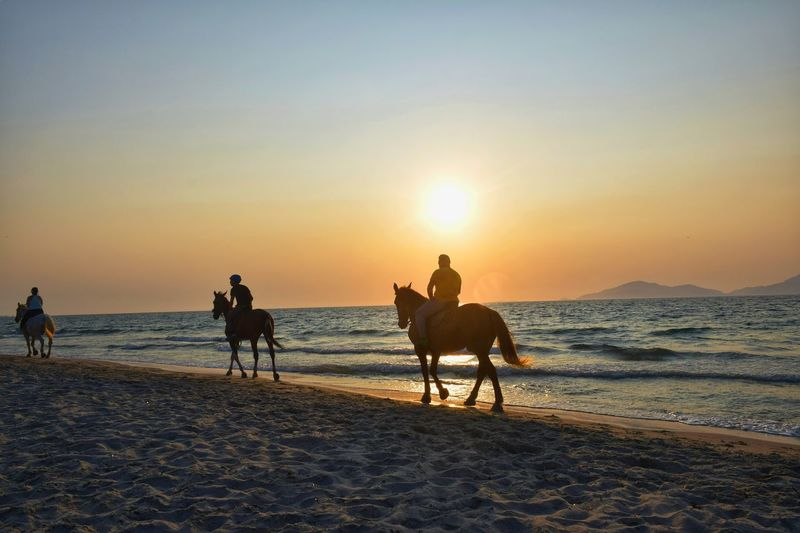 Sunset Sand Horse Beach Riding Domestic Animals Silhouette Horseback Riding Transportation People Vacations Business Stories