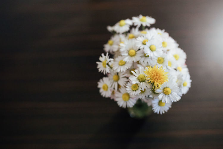 Prominent Maverick Loner Flower Flowering Plant Freshness Plant Flower Head Vulnerability  Fragility Beauty In Nature Close-up Inflorescence Petal Daisy White Color Nature Indoors  No People Table Wood - Material Directly Above Yellow Pollen Flower Arrangement Bouquet Outstanding