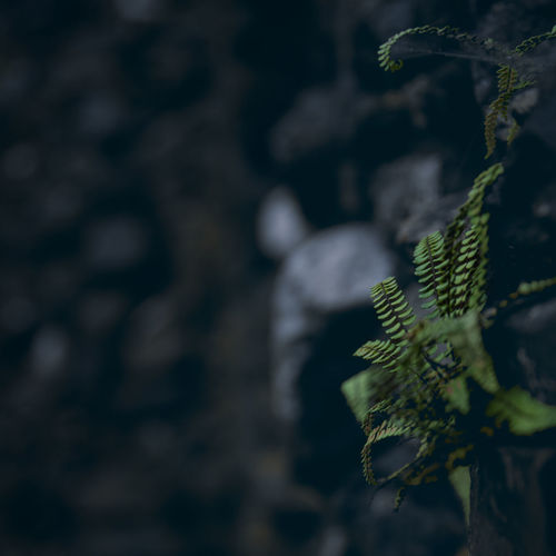 Lichen Leaves Wall - Building Feature Sunlight Branch Trunk Tree Trunk Tranquility Beauty In Nature Outdoors Green Color Selective Focus Tree Day Focus On Foreground No People Close-up Nature Plant Part Growth Leaf Plant EyeEmNewHere