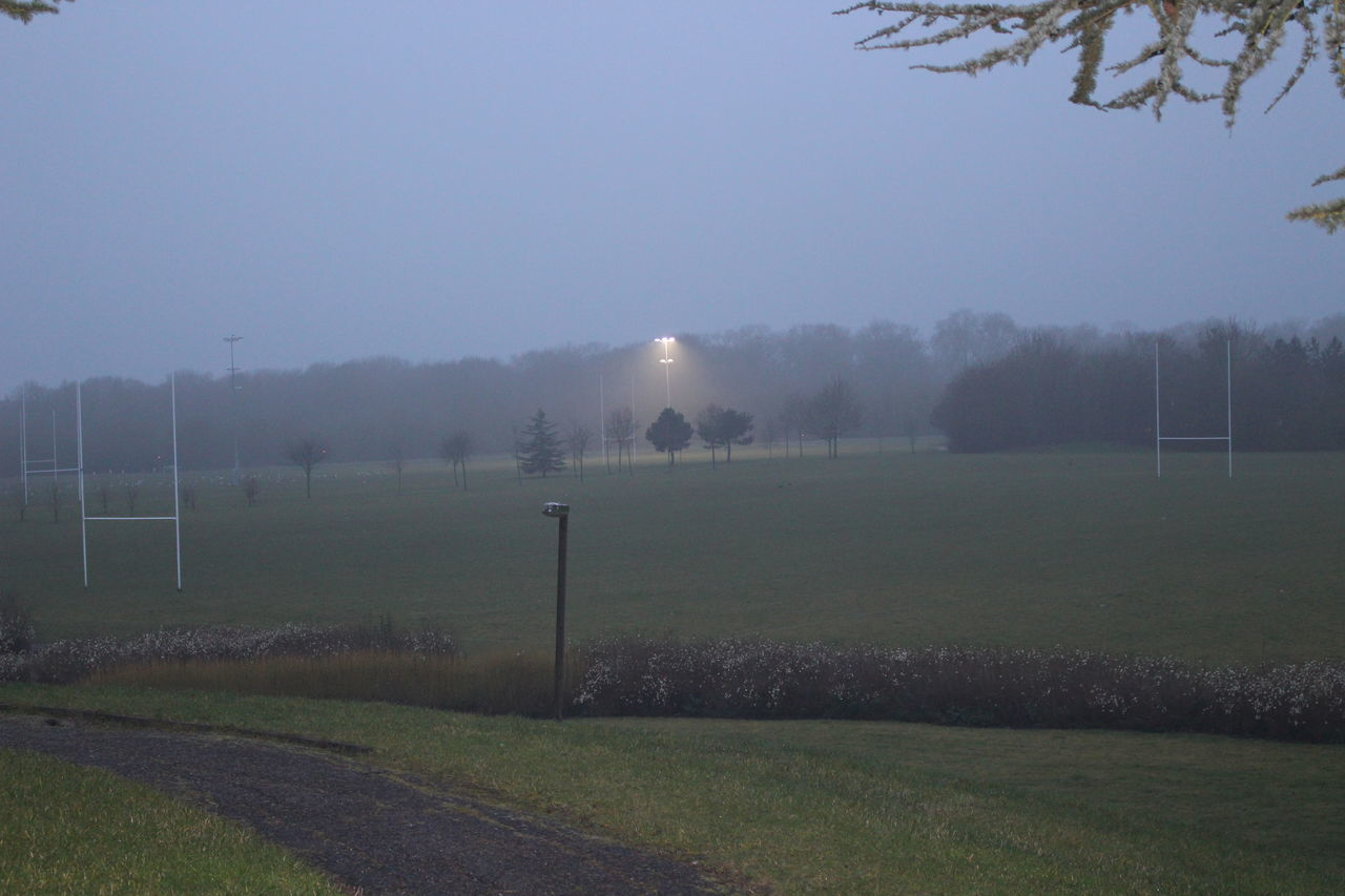 Beauty In Nature Field Fog Landscape Nature No People Outdoors Rugby Pitch Sky Tranquil Scene Tranquility Tree