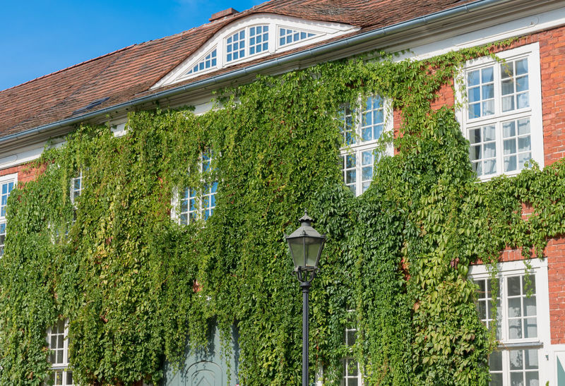 Architecture Building Exterior Built Structure City City Life Creeper Creeper Plant Green Green Color Growth Historic Holländisches Viertel Holländischesviertel House Ivy Low Angle View No People Old Outdoors Overgrown Repetition Residential Building Residential Structure Tree Window