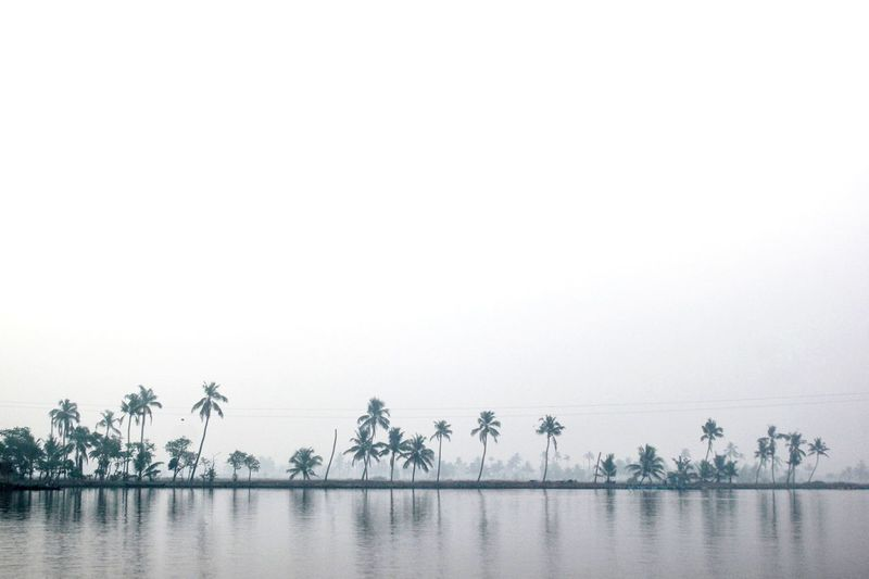 Lakescape with reflection of coconut trees