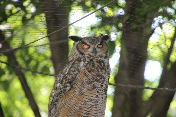 Who Me? This owl is real... no editing involved! Alien? Or not? You be the judge!