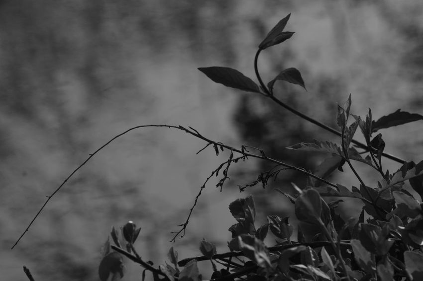 Beauty In Nature Blackandwhite Branch Close-up Day Eye4photography  EyeEm Best Shots EyeEm Nature Lover Growth Leaf Light And Shadow Nature No People Outdoors Plant Sky Textured  Tree Water