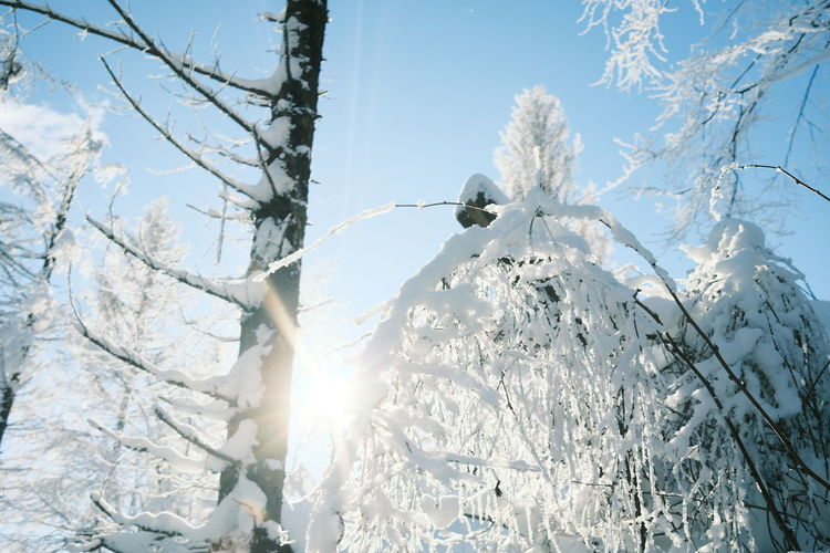 Low angle view of frozen tree against bright sun