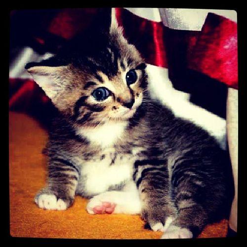 Instafavourite Instaphoto Instacat Instapet catoftheyear kitty kedileralemi
