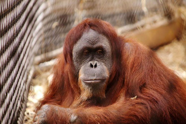 Portrait of monkey in zoo