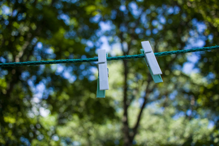 Close-up Clothesline Clothespin Day Drying Focus On Foreground Green Color Hanging Laundry Low Angle View Nature No People Outdoors Rope Tree
