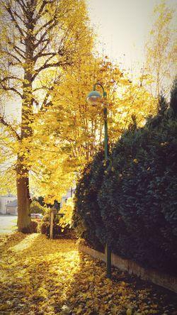 Naturefightsback  Autumn Colors Autumn🍁🍁🍁 2015  Falling Leaves