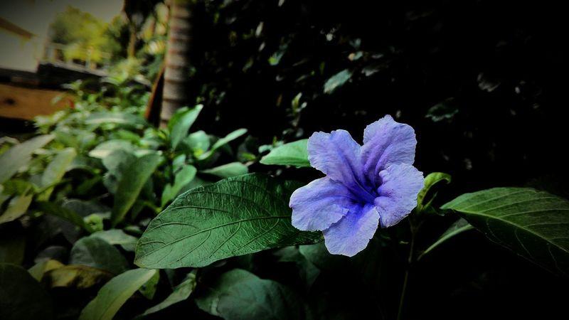 Flower Thewalkingdead Qoutes Photooftheday Photography Enjoying Life Lifestyle Music Metalhead \m/ Metal