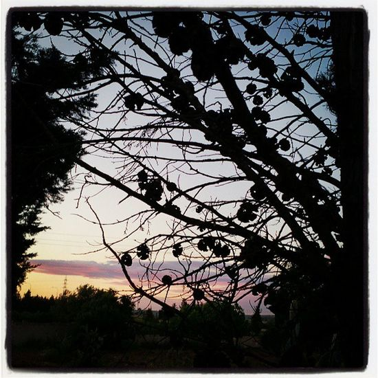 Bondia Buenosdias Goodmorning Hejhej Mallorca