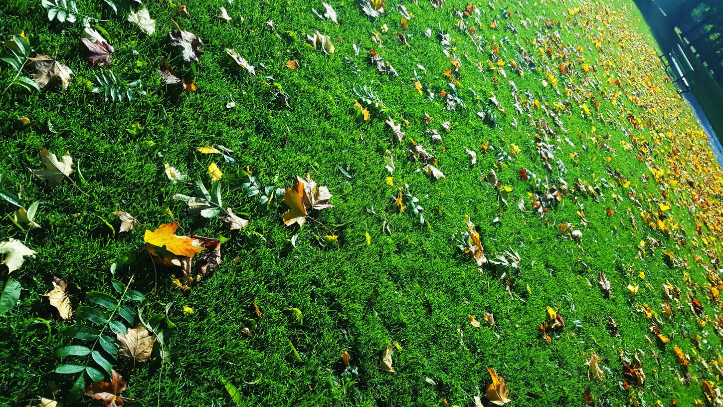 This Is Autumnday 18. Leaves Sea Of Leaves Green Grass Autumn At The Park