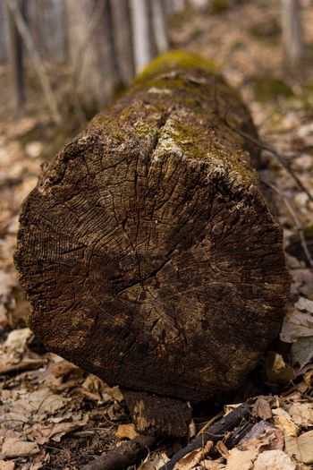 Close-up Land Nature No People Focus On Foreground Day Solid Pattern Plant Natural Pattern Still Life Tree Growth Rough Textured  Rock - Object Outdoors Field Rock Sunlight