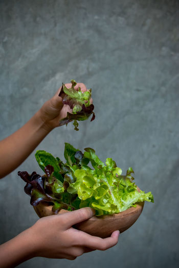 Cropped hands of woman holding lettuce in wooden bowl against wall