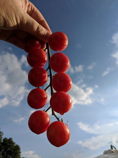 Cropped image of person holding tomatoes against sky