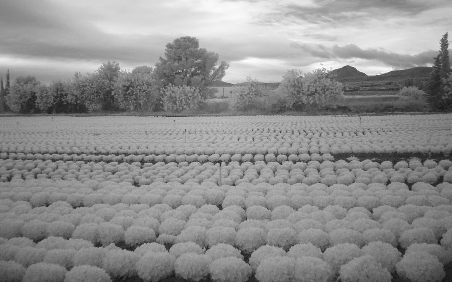 Planting Lettuce Abundance Farming Infrared Photography Outdoors Relaxing Moments