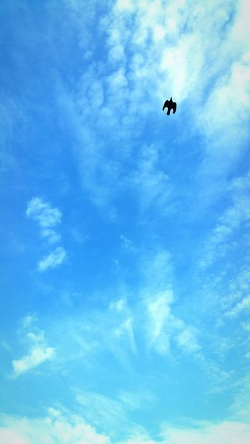 In Flight Bird Of Prey Soaring Birds Red Kite Over My House My View Blue Wave
