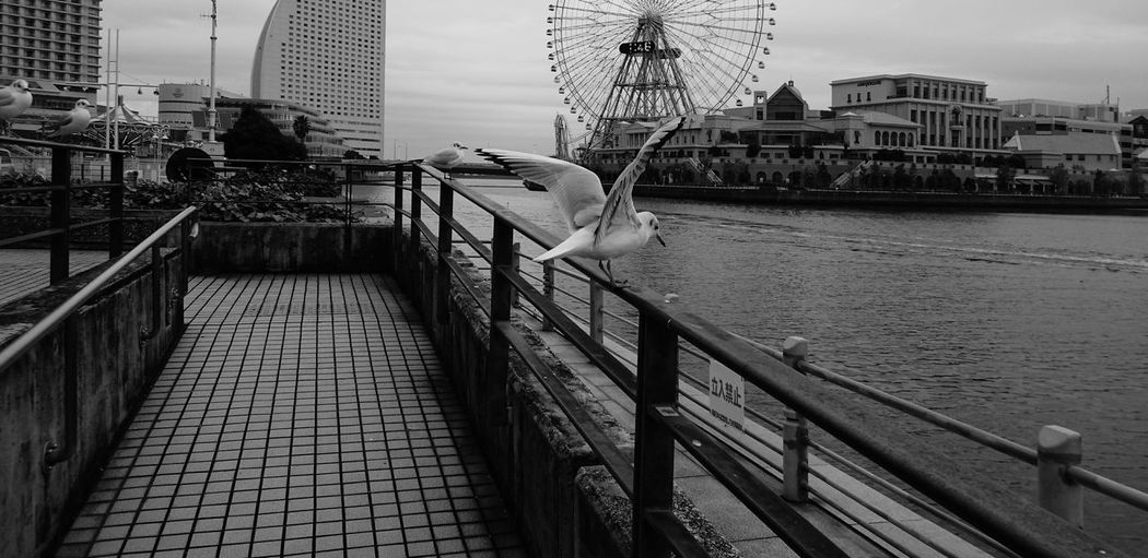 B&w Street Photography My Best Photo 2015 Bird Ferris Wheel Sea Seagulls Xperia Z4 Yokohama Minatomirai みなとみらい Here Belongs To Me Black And White Streetphotography The Street Photographer - 2016 EyeEm Awards The Architect - 2016 EyeEm Awards Nature's Diversities Ultimate Japan Japan