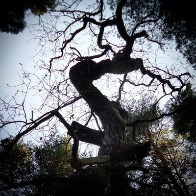 Saker jag mår bra av, del 29: Naturen. Ibland upptäcker man platser som får skaparlusten att vakna... Självläkning Process 100sakerjagmårbraav