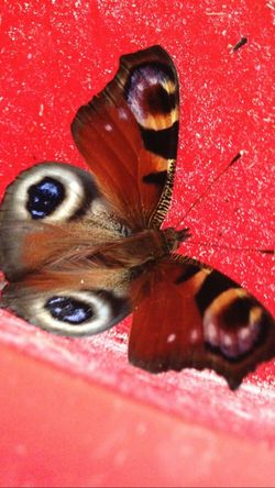 Red Insect Close-up No People Nature Butterfly - Insect Taking Photos Green Color Beauty In Nature Orange Color EyeEm Nature Lover EyeEm Best Shots - Nature Eye's Are Always Watching You Eye's Looking At You♡ Blue Eye's